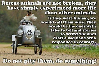 don't pity them, do something